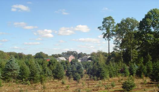 Home - Peaceful Hill Tree Farm